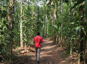 Take a tour of a spice plantation in Periyar