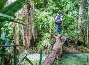 Walking in Madidi rainforest