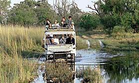 Vehicle on the Buffalo Safari