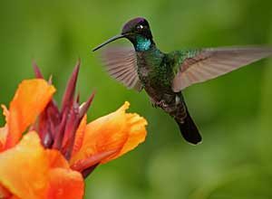 Watch hummingbirds in the cloudforest