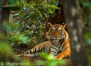 Look for tigers in Ranthambore