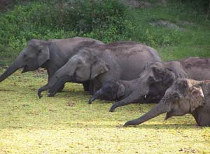 Elephants in Wayanad, India