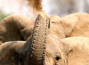 The elephant hide allows for great photographs