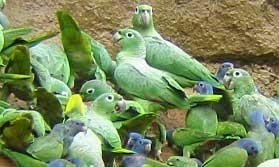 Rainforest lodge in Ecuador