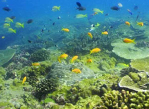 See fish as you snorkel near Neptunes Nursery