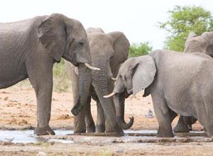 Elephant family in Etosha National Park