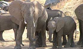 Selous and Ruaha safari