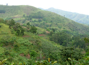 Lovely scenery in Bwindi