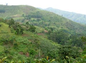 Lovely scenery in Bwindi