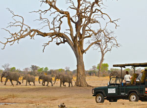 Bomani Tented Lodge game drive